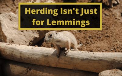Herding Isn't Just for Lemmings