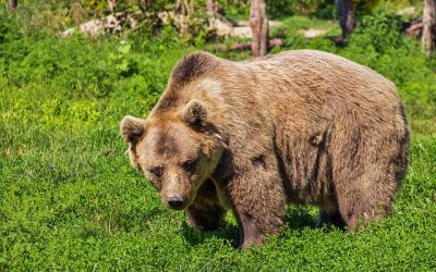 Should I Sell When the Market is Low?  Dealing with the Bear Market